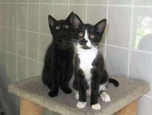 babys katzen namens nämliche