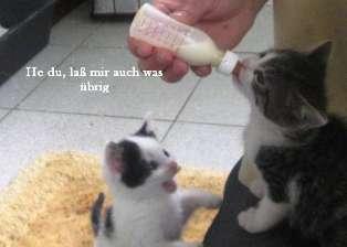 katze kommt nicht kuscheln