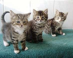 alter größe gewicht katze